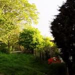 Garten für unsere Samojeden