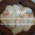Welpen vom V-Wurf